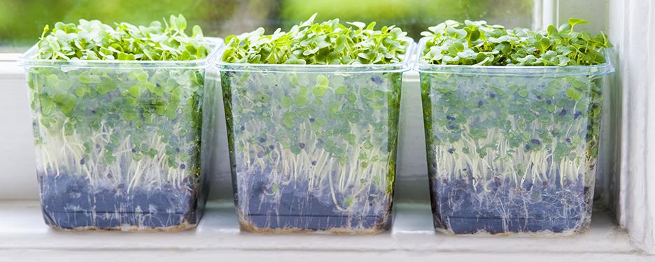 Organic growth and inorganic growth