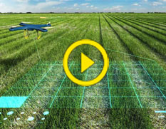 Microsoft, EY empower transformation in agriculture